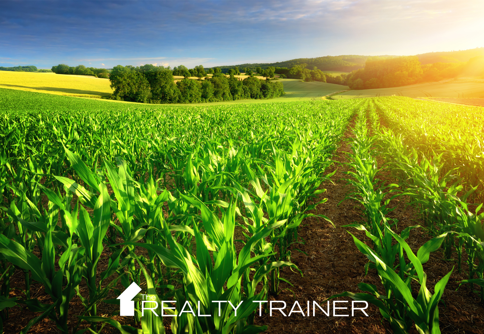 Real Estate Farming Techniques for Agents